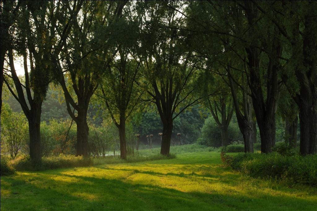 thorpe_meadows_-_willow_trees[1]